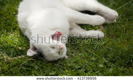 Beautiful white funny cat portrait on green glass