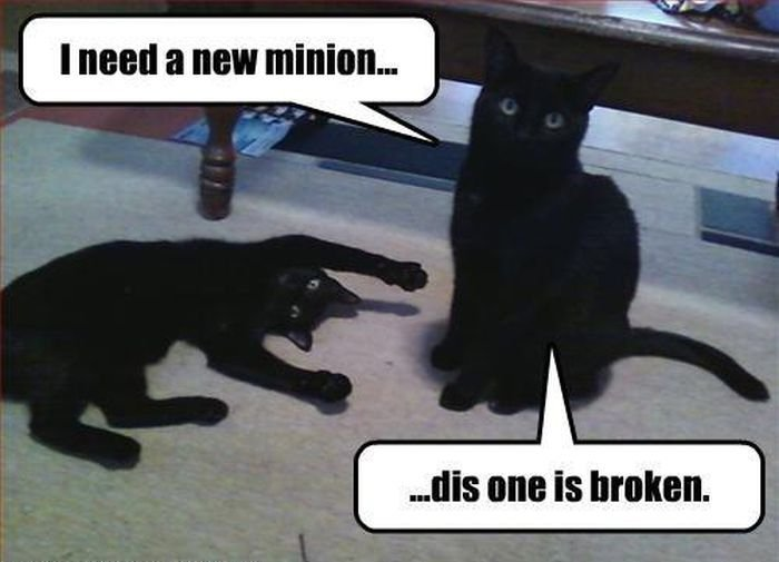 Catch the Incredible Black On Black Cat Funny Memes