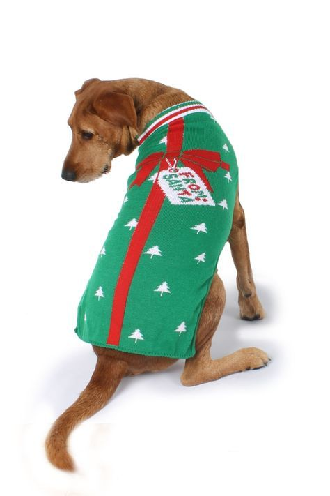 Was your dog a great and exciting t to your previously dogless life Wrap your dog up like the little present they are with this sweater