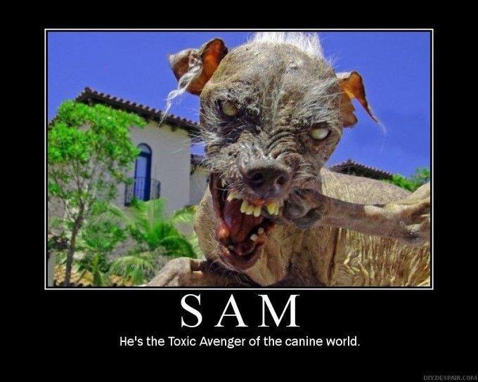 Sam the World s Ugliest Dog
