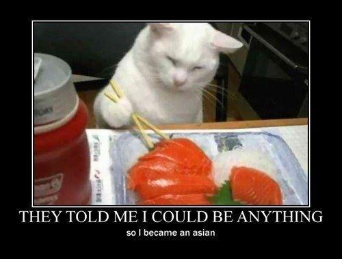 Sushi cat Sushi Cat Cat ics Funny Bing Funny