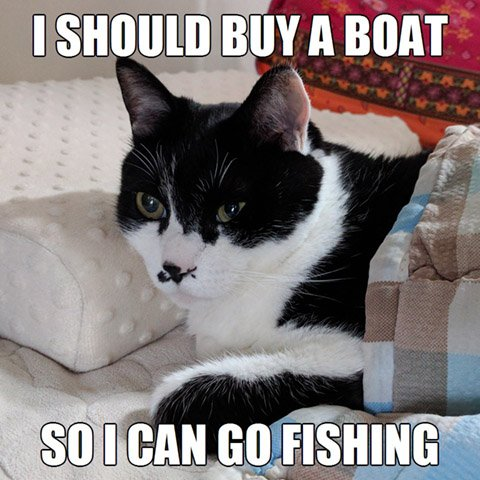Get The New Funny Cat Memes Tgif Hilarious Pets Pictures