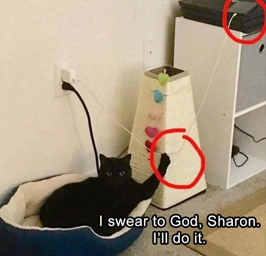 funny cat iphone memes