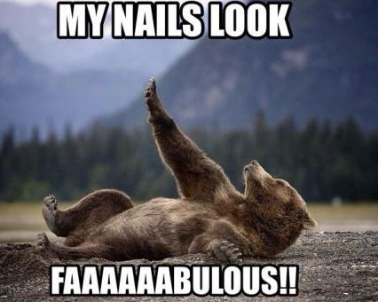 funny picture bear nails fabulous