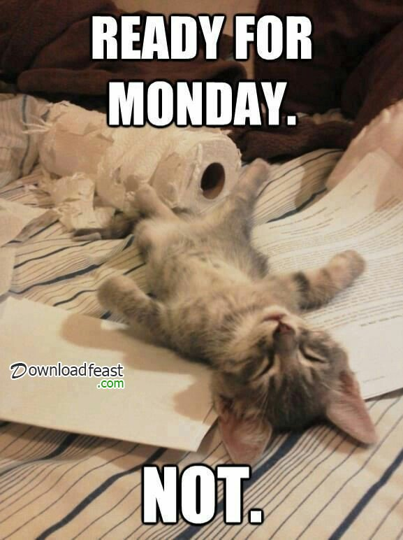 Funny Monday Meme
