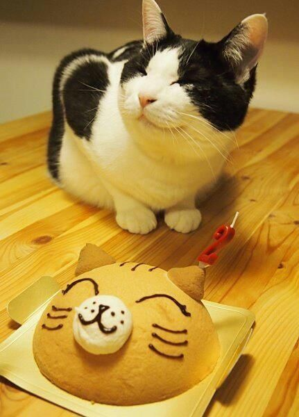 Cat · Happy birthday