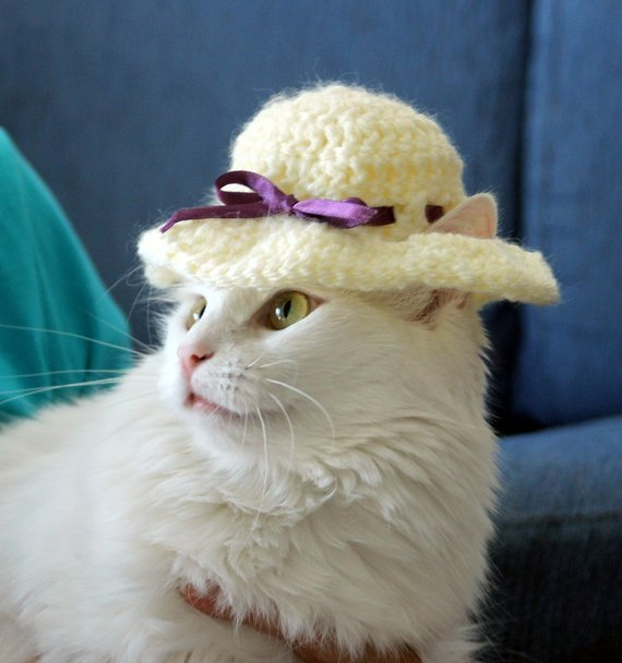 Catch the Inspirational Easter Funny Cat Pictures