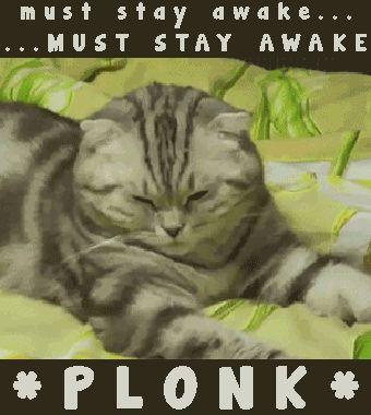 Funny Animal Memes Funny Cats Funny Animals Funny Memes