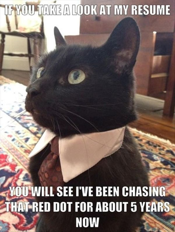 Catch the Inspirational Funny Cat Says What Memes
