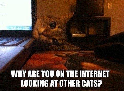 internet puter Cats funny