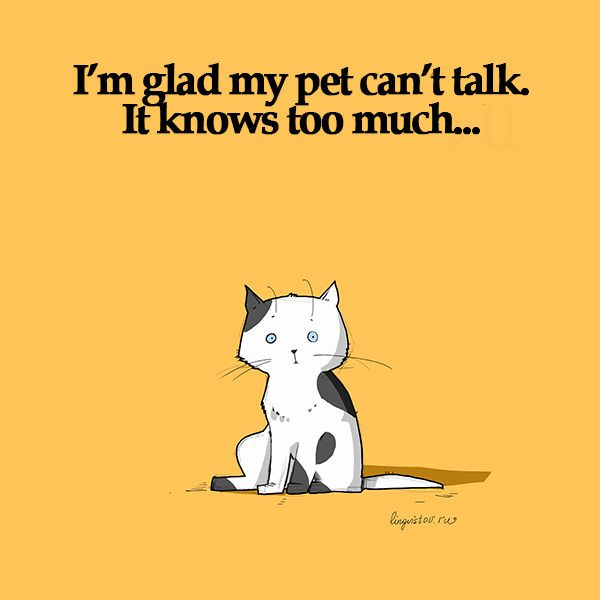 I m glad my pet can t talk It knows too much