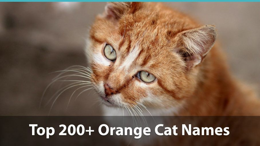Catch the Inspirational orange Cat Pictures Funny