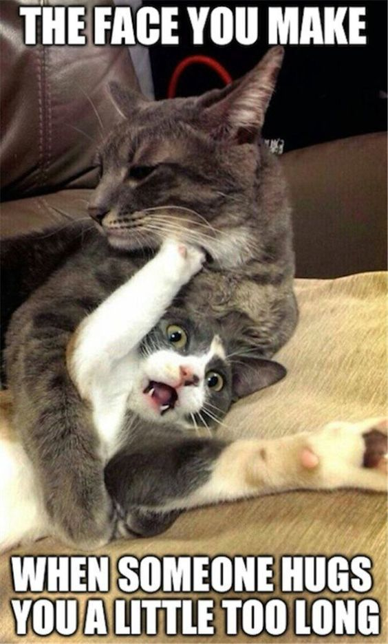 19 Cat So Funny We Dare You Not To Laugh