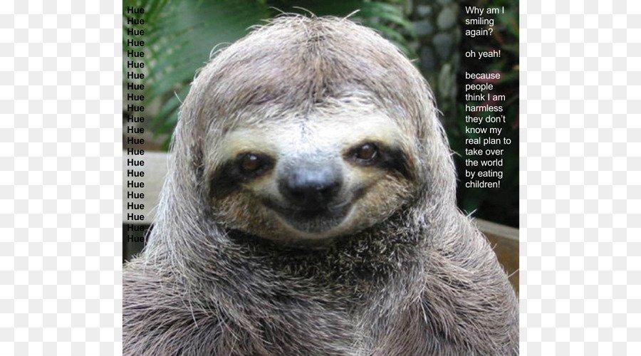 Sloth Cat Dog Funny animal sloth zootopia