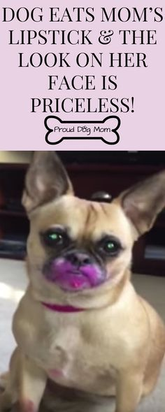 Dog Eats Mom s Lipstick & The Look Her Face Is Priceless