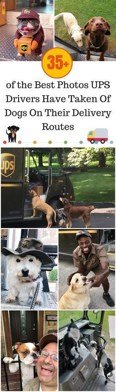 35 The Best s UPS Drivers Have Taken Dogs Their Delivery Routes