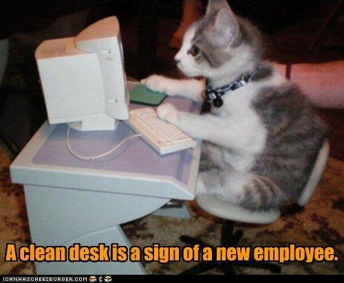 cat employee work kitten puter kitty funny