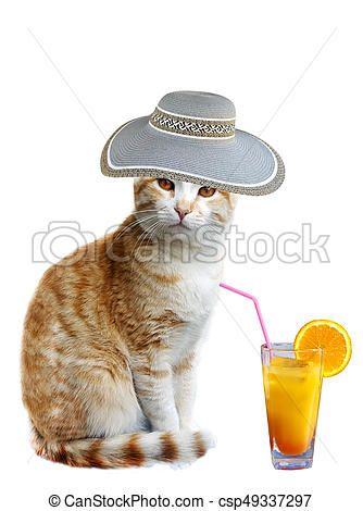 Funny summer cat with hat peeking and orange juice csp