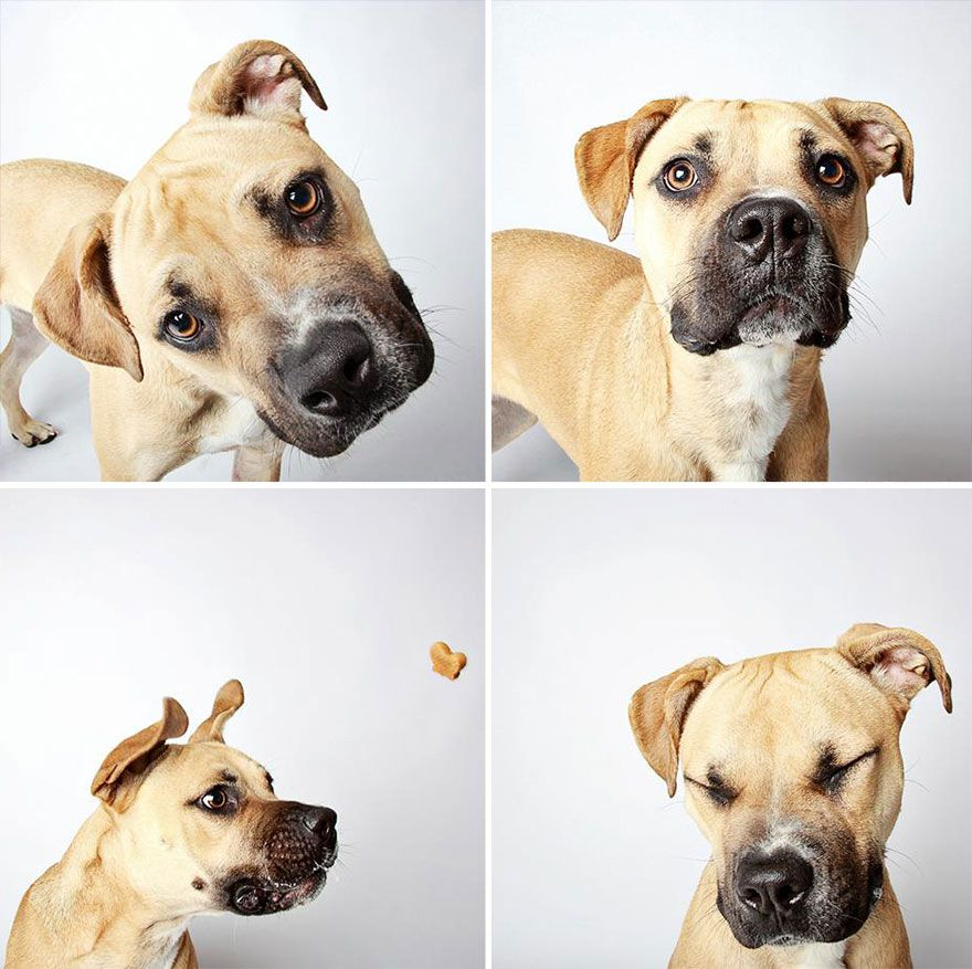 adopted dog teton pitbull humane society utah 26