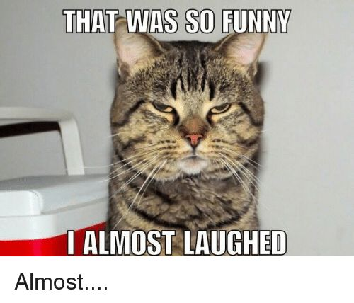 Funny Grumpy Cat and Almost THAT WAS SO FUNNY ALMOST LAUGHED Almost