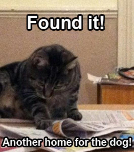 Funny Cat Pics with Captions — 60 pictures