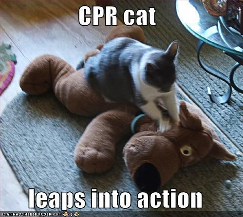 Funny dog photo with caption cpr cat save scooby doll