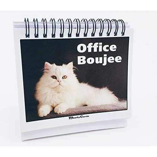 fice Gift For Cat Lovers Moodycards Make Everyone Laugh with These Adorable and Hilarious