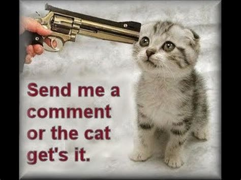 Catch the Marvelous Funny Cat Pictures with Words and Guns