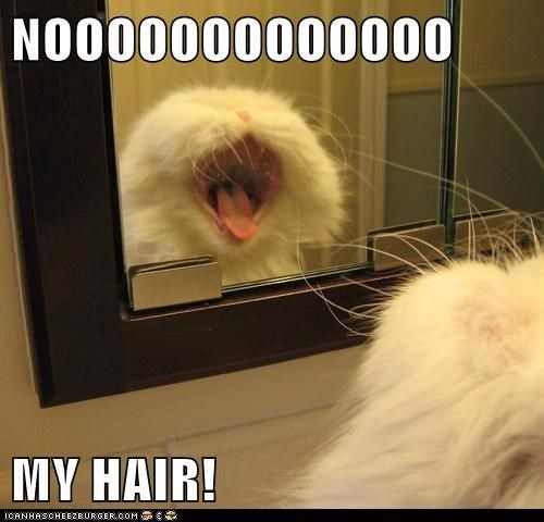 bad hair day ugly Cats captions mirror scream