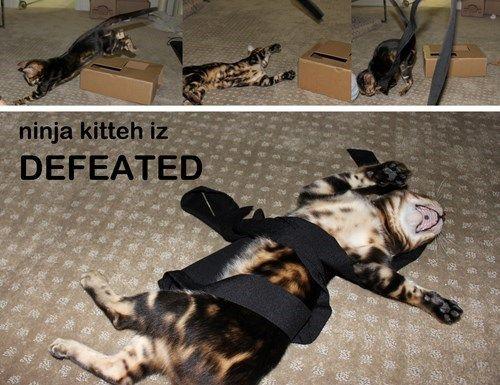 ninja defeat cats are weird Cats