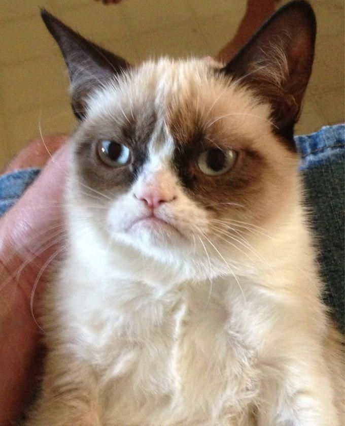 The original Grumpy Cat pic that turned into a meme