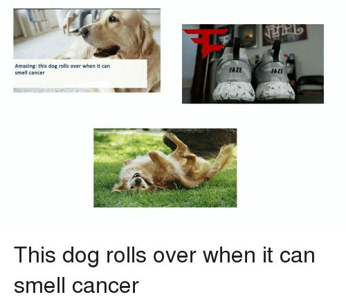 Dogs Smell and Amaz Amazing this dog rolls over when it can