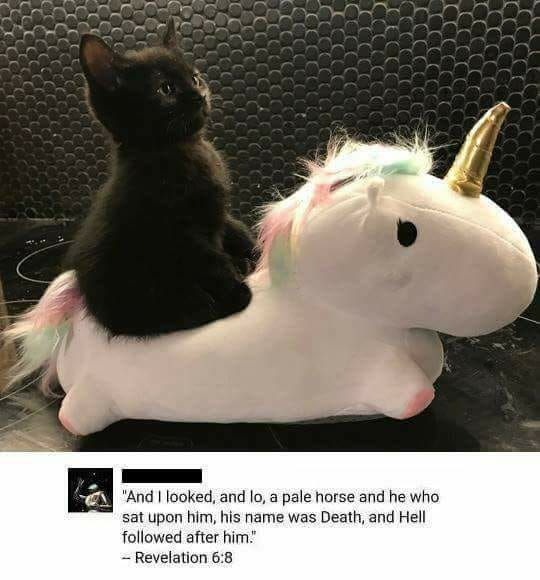 black cat unicorn