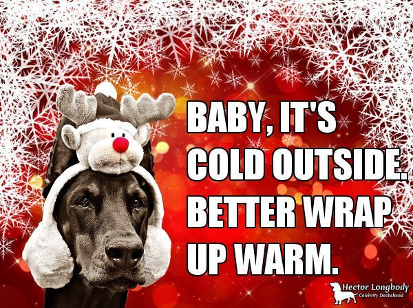 Fun dog Christmas card with witty meme based on the hit song Baby it s cold outside