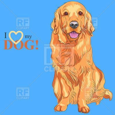 Sitting Golden Retriever on the blue background I love my dog Vector Image – Vector