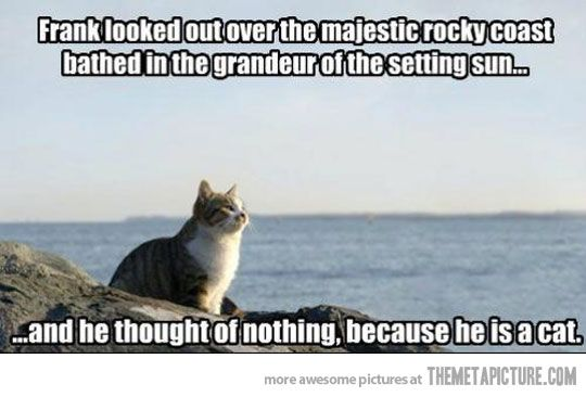 funny cat inspirational quote