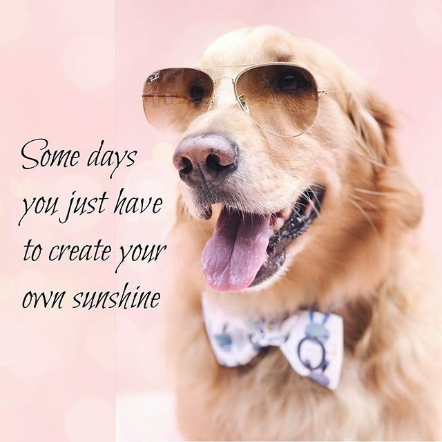 H E L L O Monday dogaccessories threespoileddogs threespoileddogsmodel mysunshine Dog Quotes Inspirational