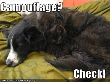 Dog and Cat See more funny pictures at icanhascheezburger