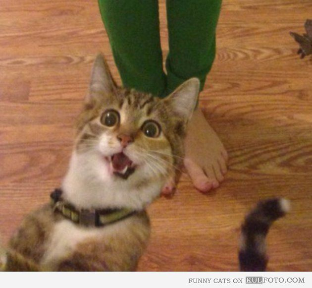 That awkward moment when you realize that they re not cats Ceiling cat BUYbull Pinterest