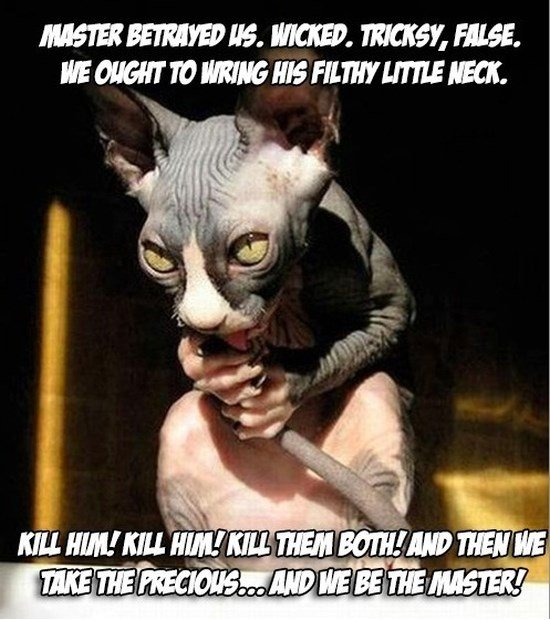 Funny scary cat hobbit