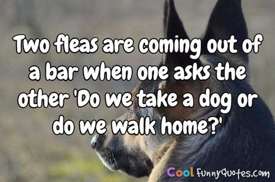 Two fleas are ing out of a bar when one asks the other Do we take a dog or do we walk home