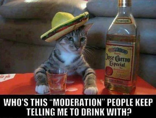 Funny cat drinking
