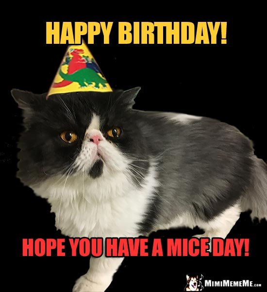 Unenthusiastic Party Cat Says Happy Birthday Have a Mice Day
