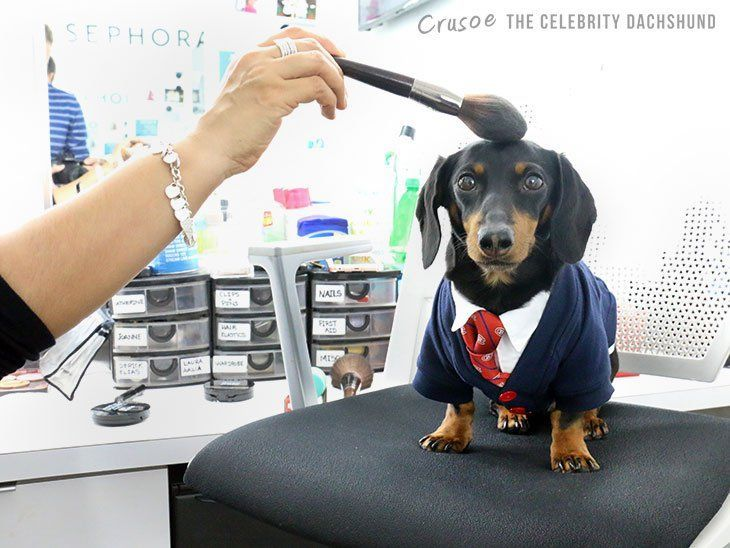 crusoe dachshund breakfast television montreal