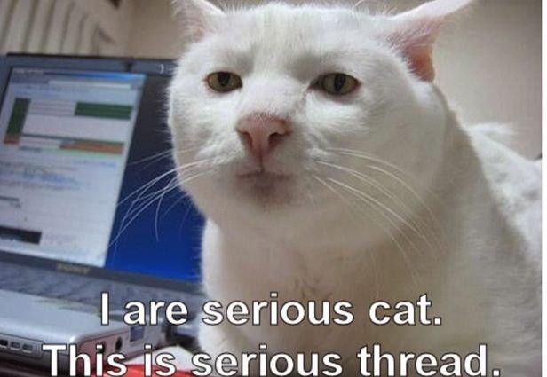 Catch the Prodigious Morbid Cat Memes Funny