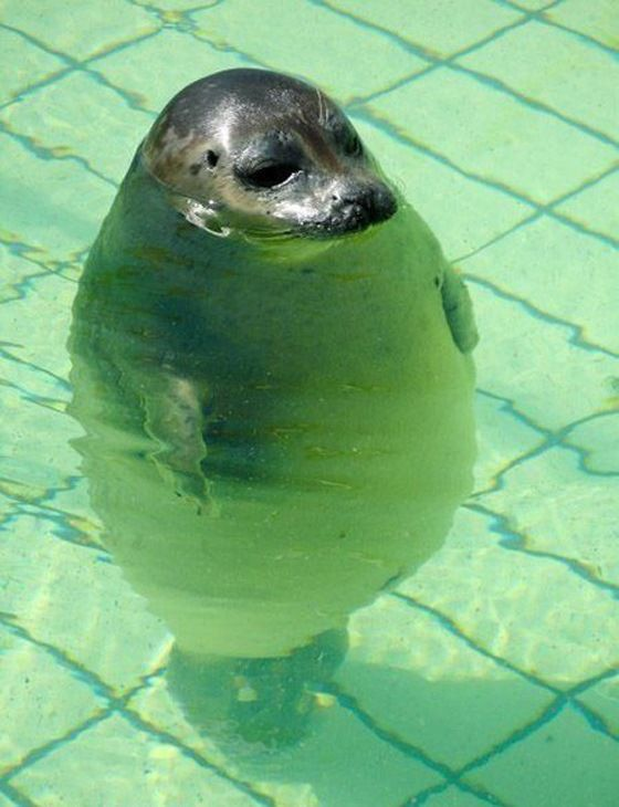 Does water make me look fat