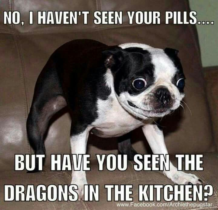 Funny Animals of The Day 35 photos Morably