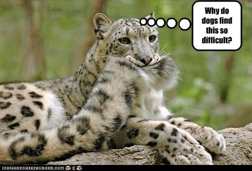 Leopards Funny Pics Funny Love