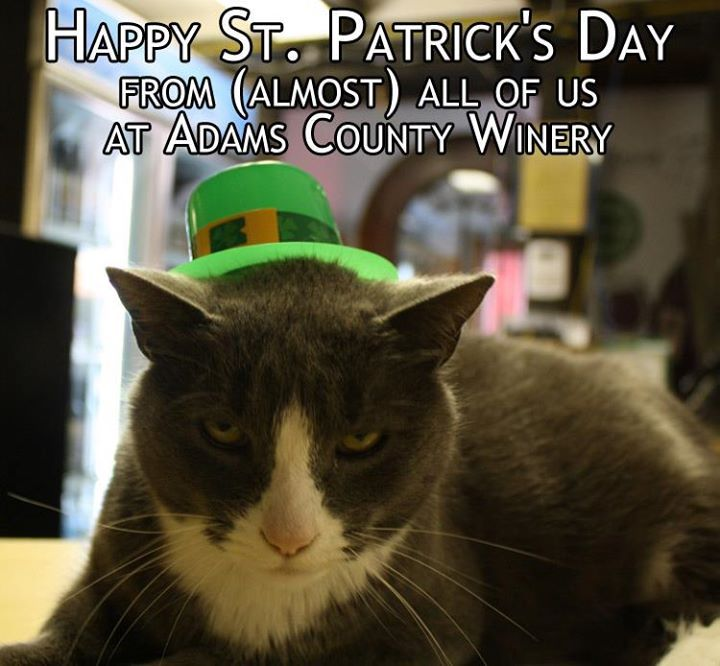 Catch the Shocking Funny Cat St Patrick's Memes
