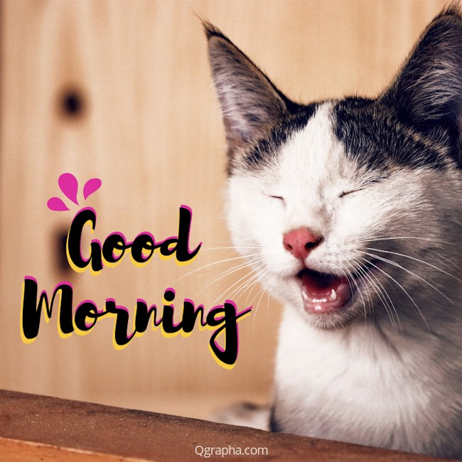 Good Morning Funny Cat